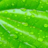 photographie d'un végétal pour illustrer la page