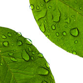 photographie d'un végétal pour un peu de couleur